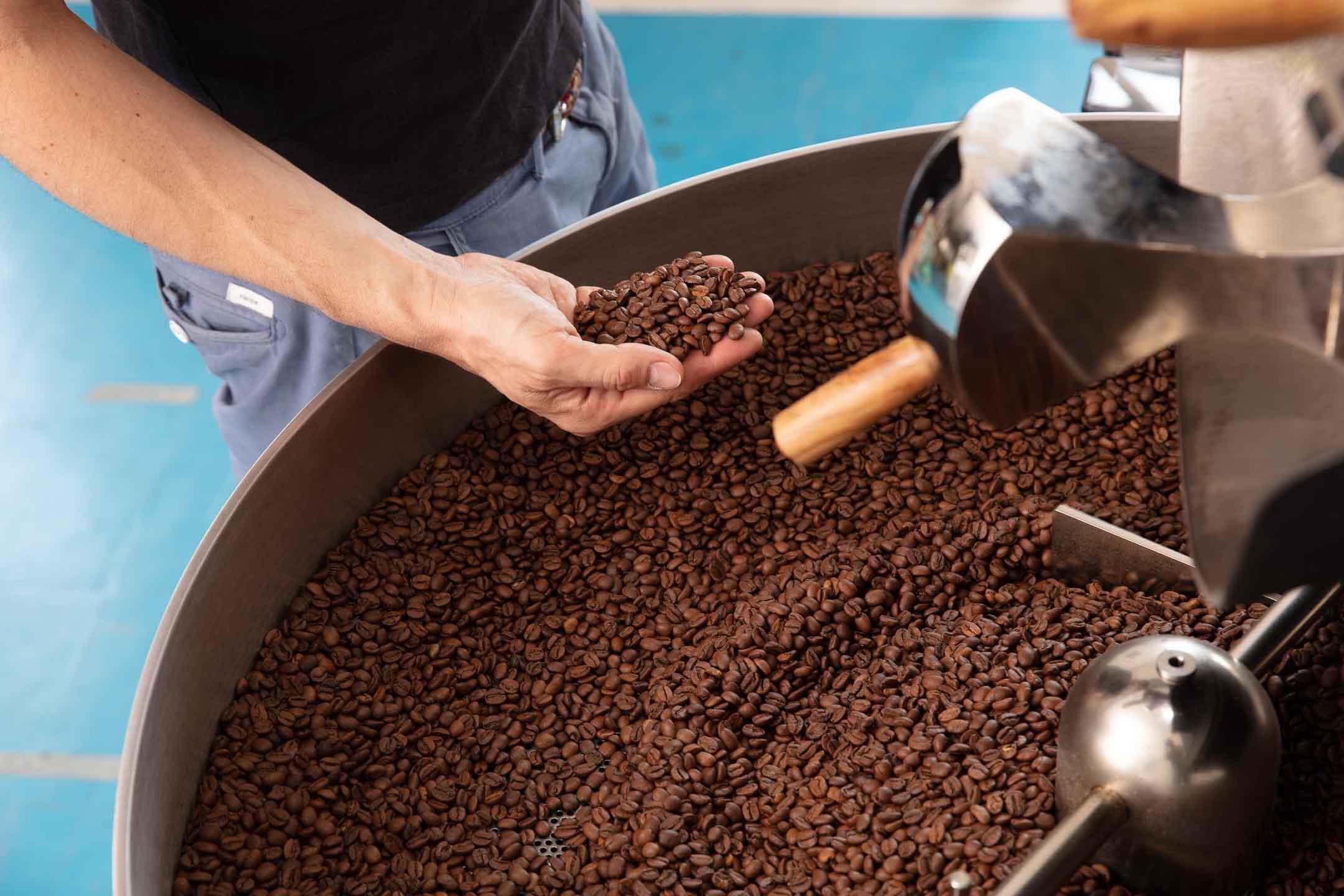 Kaffeeröster kontrolliert frisch geröstete Kaffeebohnen